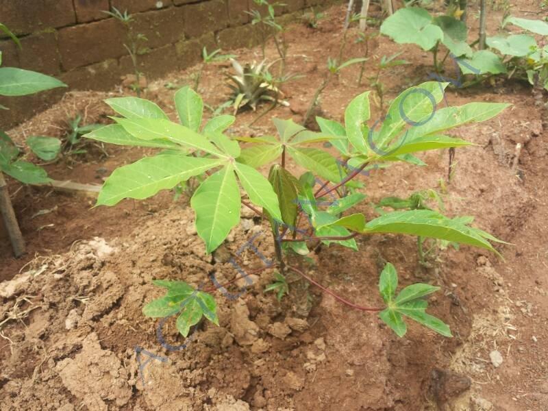 Mon gardien plante des trucs suspects actutana for Plante xiaomi