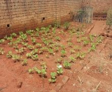 Les jardins potagers semblent vous intéresser :)