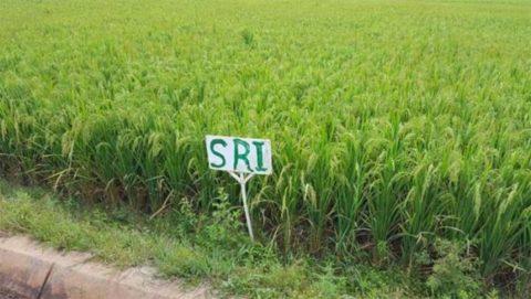 Toujours à propos de cette histoire d'Arabes qui vont venir cultiver du riz à Madagascar